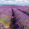 Valensole - Provence